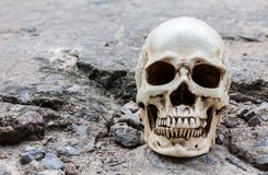Human skull on crack cement street Stock Photo