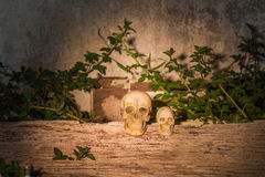 Human skull (cranium) on wood. With vignetted corners royalty free stock photography
