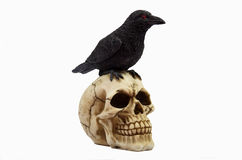Human skull with crow on top Royalty Free Stock Photo