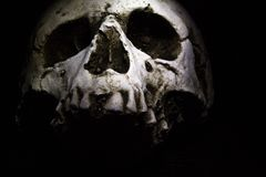 Skull on Dark background. A human skull on a dark background royalty free stock images
