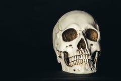 Skull in the dark. Human skull on dark background royalty free stock photography