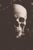 Human skull. In Dark mood background royalty free stock photos