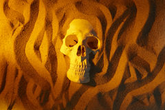 Human skull in desert Stock Photography