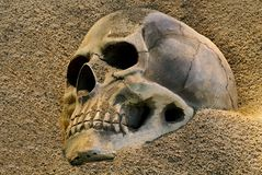 Human skull in the dessert sand. Human skull visible in the dessert sand Royalty Free Stock Photography