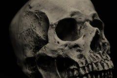 Human skull. Detail in black background Stock Image