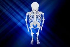 Human Skull Royalty Free Stock Images