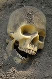 Human skull in dirt Stock Images