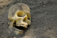 Human skull in dirt Stock Photo