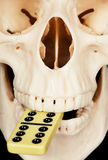 Human skull and dominoes Stock Image