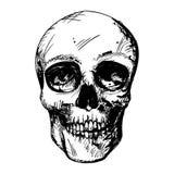 Human Skull Drawing Royalty Free Stock Photos