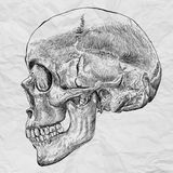 Human Skull Drawing line on White crumpled paper Stock Photos