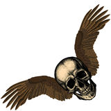 Human skull with eagle`s wings Stock Photos