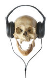 Human skull in earphones. Stock Photography
