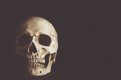 Human skull with empty space. On black background Stock Photo