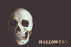 Human skull with empty space in Halloween. Day on black background Stock Photography