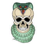 Human skull entwined snake vector  front side. Human skull entwined snake vector illustration  front side Stock Image
