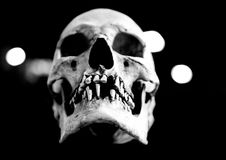 Human skull floating in the air. Fiberglass human skull missing teeth on a black background with bokah Royalty Free Stock Photography