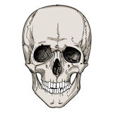 Human skull with floral wreath Stock Images