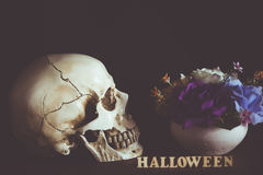 Human skull beside flower vase and wooden alphabet Halloween on. Wooden floor in halloween day on black background Royalty Free Stock Images