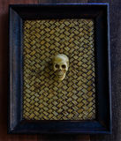 Human Skull in the frame Stock Image