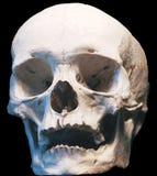 human skull, front view Royalty Free Stock Photos