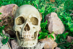 Human skull in the garden Stock Images