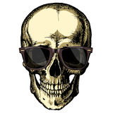 A human skull with glasses on a blank background Royalty Free Stock Photography
