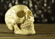 Human skull on glitter background Royalty Free Stock Image