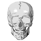 Human skull graphic Stock Photography