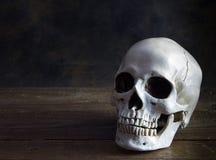 Human skull in half light on wood floor Royalty Free Stock Photo