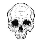Human skull hand drawn in tattoo style. Human skull scary art hand drawn in line style. Isolated vector illustration. Can be tattoo, bag print, t-shirt print Stock Images
