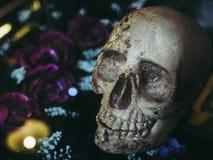 Human skull head royalty free stock photo
