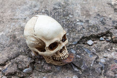 Human skull hold rusty metal plate Royalty Free Stock Photo