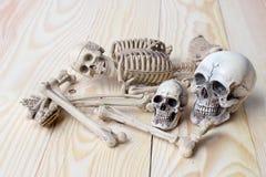 Human skull and human skeleton on pine wood background royalty free stock photo