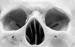 Human skull. Photos in the studio stock photography