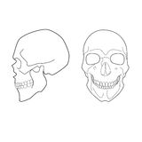 Human skull. Illustration of human skull in profile and full face Royalty Free Stock Photography