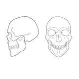 Human skull. Royalty Free Stock Photography