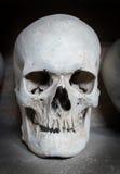 Human skull inside a catacomb Stock Photos