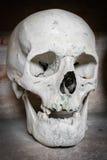 Human skull inside a catacomb. Stock Image