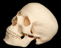 Human skull isolated on black background Royalty Free Stock Photos