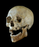 Human skull. Royalty Free Stock Photography