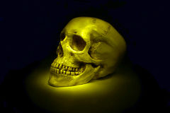 Human skull isolated. On the black background Royalty Free Stock Image