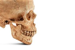 Human skull isolated Stock Photos