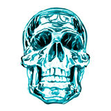 Human skull isolated, watercolor illustration on white Royalty Free Stock Images