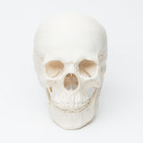 Human skull Stock Photography