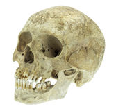 Human skull isolated on white Stock Photography