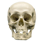 Human skull on isolated white background Stock Images