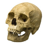 Human skull on isolated white background Royalty Free Stock Photography