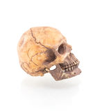 Human skull isolated. On white background royalty free stock photos