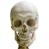 Human skull, isolated on white background Stock Images